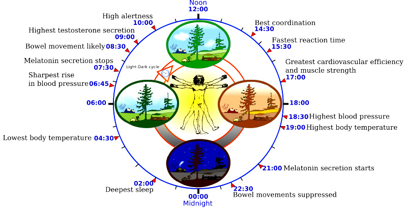 Circadian Clock: Poor Sleep - Paula Owens, MS Holistic Nutritionist and Functional Health Practitioner